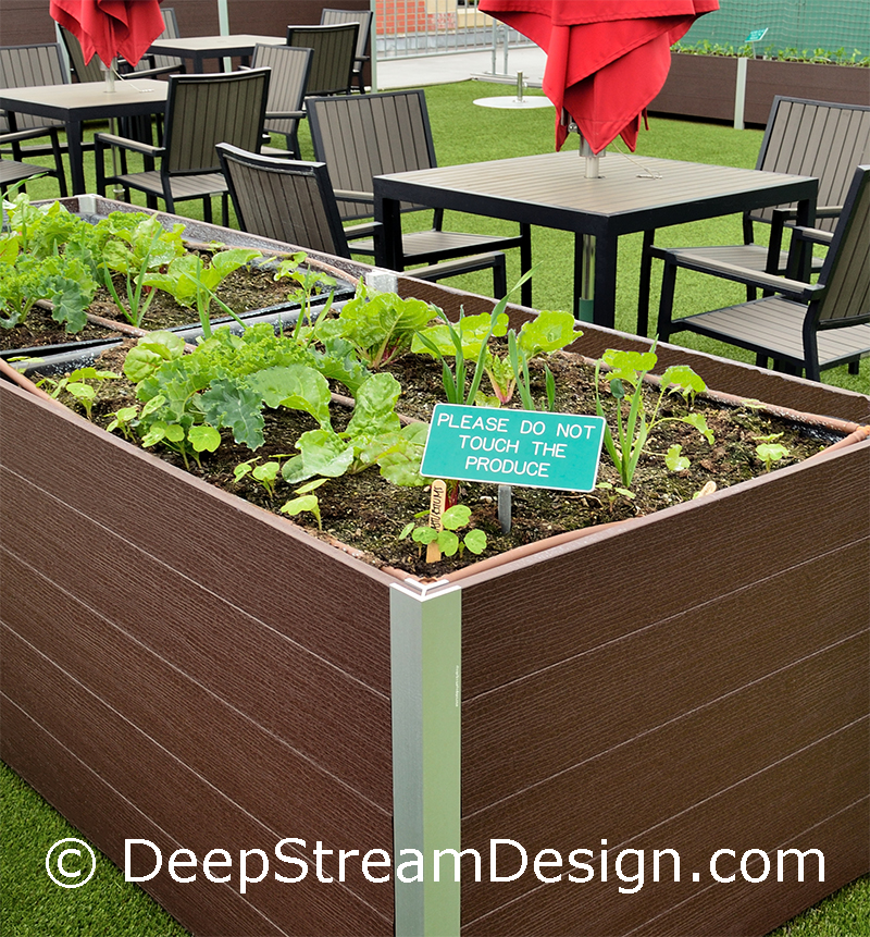 Growing vegetables in DeepStream planters at Fenway park Strega Deck