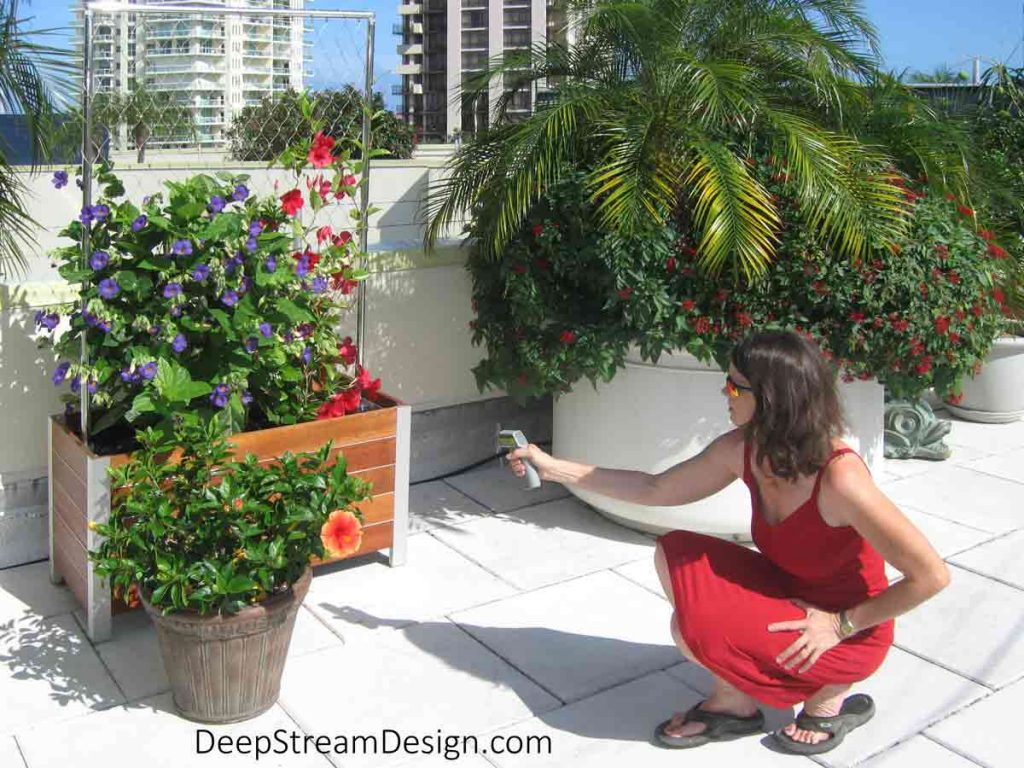 A woman is ussing a thermal gun to measure Thermal gain by taking the temperature on the outside of large planters filled with palms and flowering vines on a sunny penthouse rooftop deck in tropical Miami.